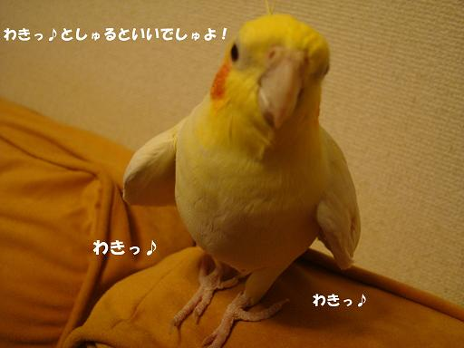 DSC03767.JPG