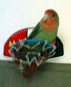 Lovebird_764_51.jpg