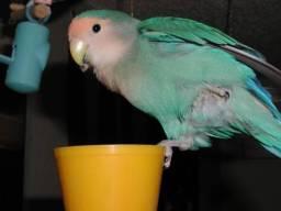 Lovebird_764_6.jpg