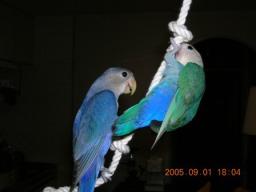 Lovebird_766_2.jpg