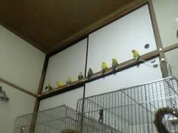 Lovebird_769_2.jpg