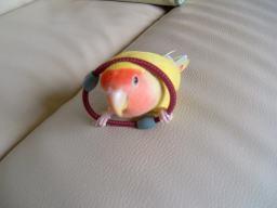 Lovebird_772_1.jpg