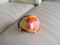 Lovebird_772_2.jpg