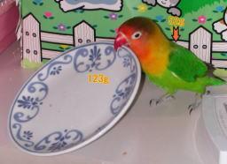Lovebird_775_2.jpg