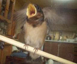 Lovebird_791_2.jpg