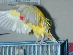 Lovebird_794_1.jpg