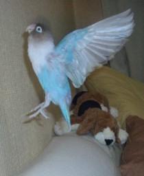 Lovebird_797_2.jpg