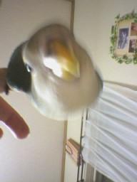 Lovebird_803_1.jpg