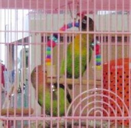 Lovebird_813_1.jpg