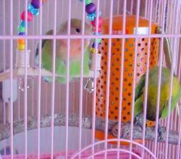 Lovebird_813_6.jpg