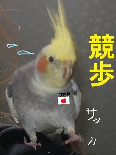競歩.JPG