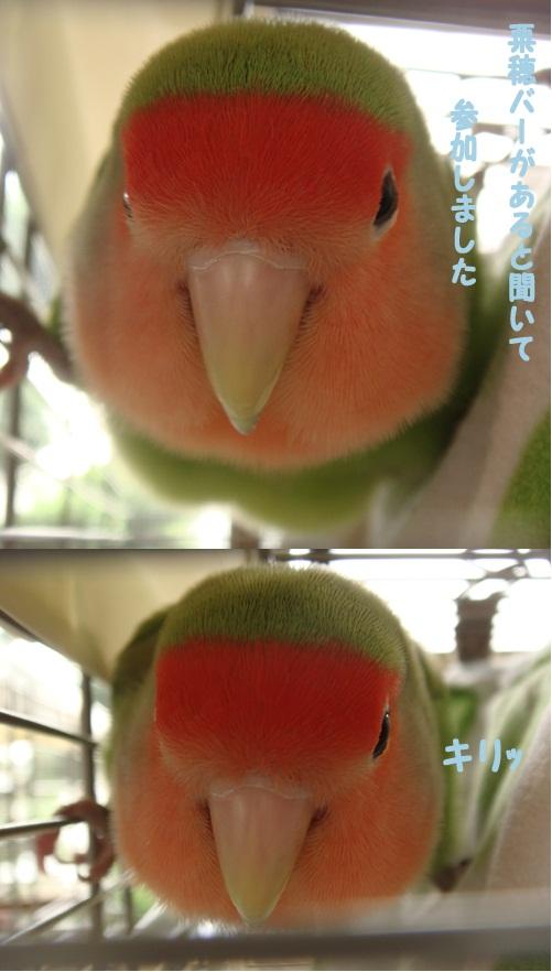 鳥のおりんぴっく個人1.jpg