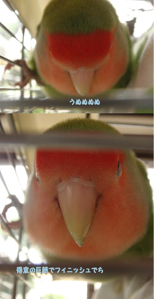 鳥のおりんぴっく個人2.jpg