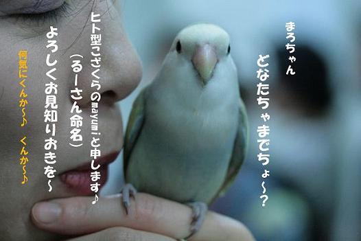 IMG_9797a.JPG