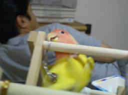 Lovebird_766_1.jpg
