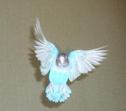 Lovebird_797_1.jpg