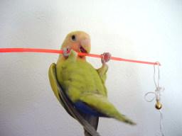 Lovebird_799_5.jpg