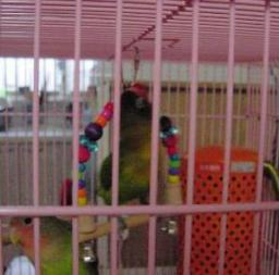 Lovebird_813_3.jpg