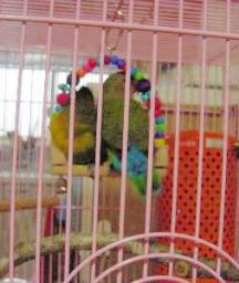 Lovebird_813_4.jpg