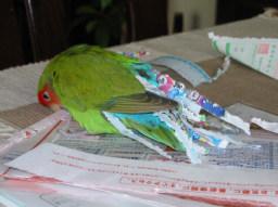 Lovebird_814_2.jpg